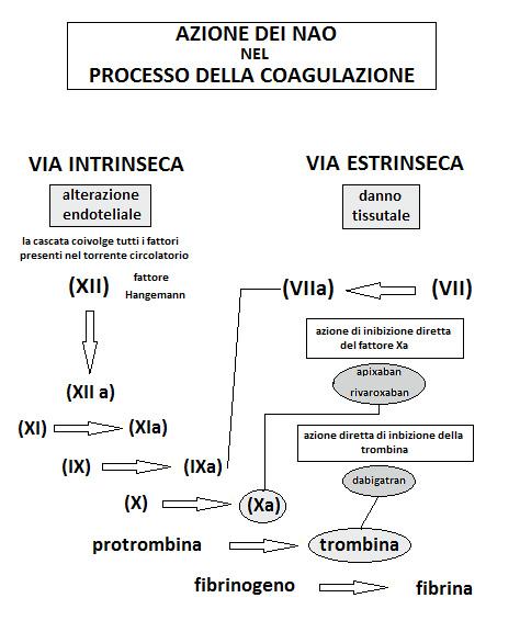 Farmaci NAO ATI14 di Medical Evidence-cascata-coagulazione-trombina